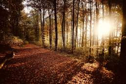 mindfulness of God